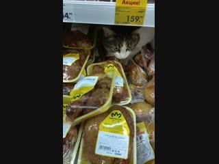 Кот ест курицу прямо в магазине.