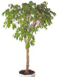 чернаямагия - Магия растений. Магические свойства растений. Обряды и ритуалы. Амулеты и талисманы из растений.  QH6ntNopZAs
