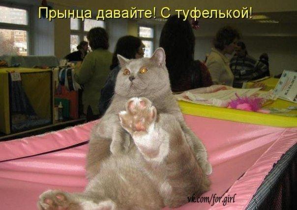 Кошачий юмор - Страница 8 CECkfFTYMfQ