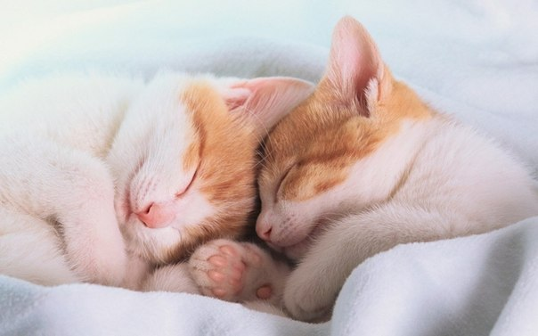 Кошки и прочие забавные животные  - Страница 3 VZsANfoyC6Y