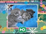 Ю - Новогодний марафон котиков!