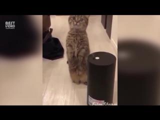 Купили увлажнитель воздуха, кота не слышно третий час