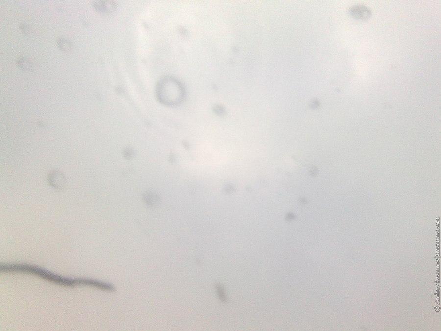 фотосъемка на телефон под водой