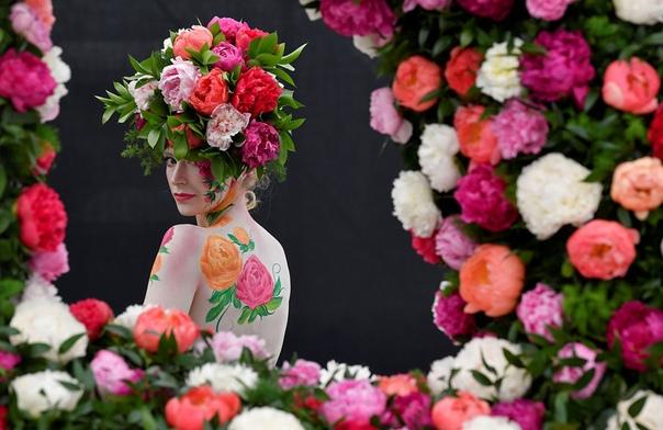 Модель с боди-артом и головным убором из пионов на RHS Chelsea Flower Show (Лондон, Англия)