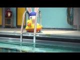 Бешеные кролики   Кролики не умеет плавать