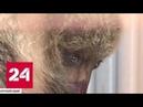 Спасенная медведица Маша добралась из Камчатки в Москву - Россия 24