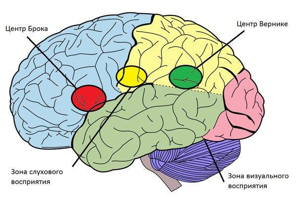 рисунок мозга: