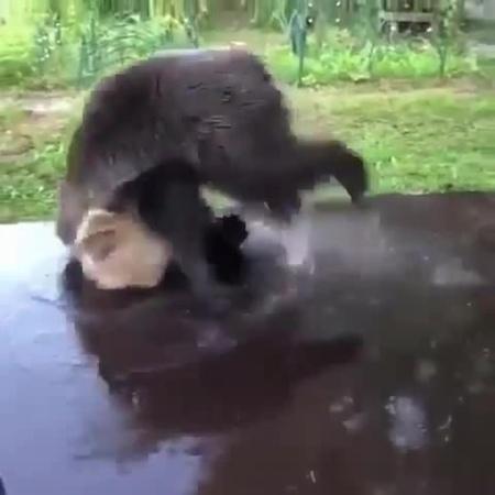 Bear's Breakdance coub
