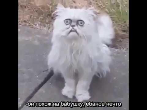 Ма, Люси и странный не моргающий всратый кот - МОРГНИ! (русские субтитры)