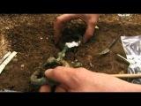 BBC История о древней Земле. Священная женщина железного века