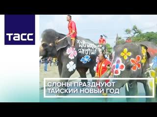 Слоны празднуют тайский новый год