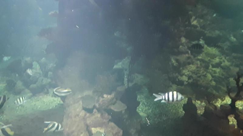 Океанариум. Акула