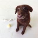 Как живые: девушка создает щенков из войлока, которых трудно отличить от настоящих собак