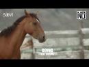 Тизер SOVI No Hopes - Going (ft Vosmoy)