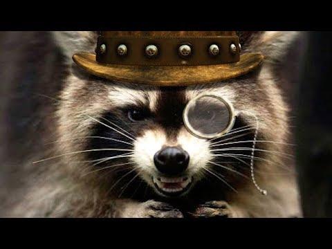 Смешные ЕНОТЫ - самые смешные животные на свете! Невероятные приколы с енотами! Funny raccoons!