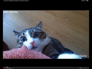 Funny cats compilation 2013/������� �������� � ������