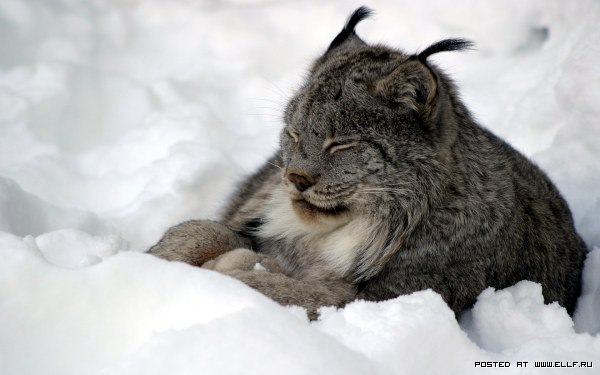 Занимательные истории о животных ,фото... - Страница 13 PX_HLZ3E7jY