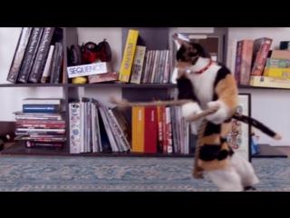 Эпическое видео про животных когда они дома