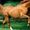 Типичный конник.