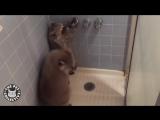 Лучшие видео с енотами. Смешной енот. (720p).mp4