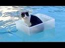 Приколы с Котами - Смешные коты и кошки ТЕСТ НА ПСИХИКУ, ПРОБУЙ НЕ СМЕЯТЬСЯ!