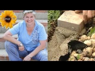 Как сделать бордюр? Секреты садовода. Дача ТВ