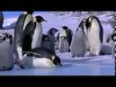 Пингвины бегают и прыгают Нелегкая жизнь пингвинов