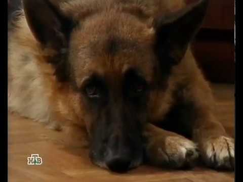 Возвращение Мухтара Сезон 2 Серия 3 43 Дама с собачкой