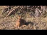 Животные спасают друг друга (6 sec)