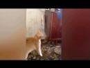 ПСих кот