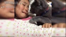 CUTE is NOT enough Cutest Cat 😺 Comforting Babies 👶 Baby and Cats always are best friend