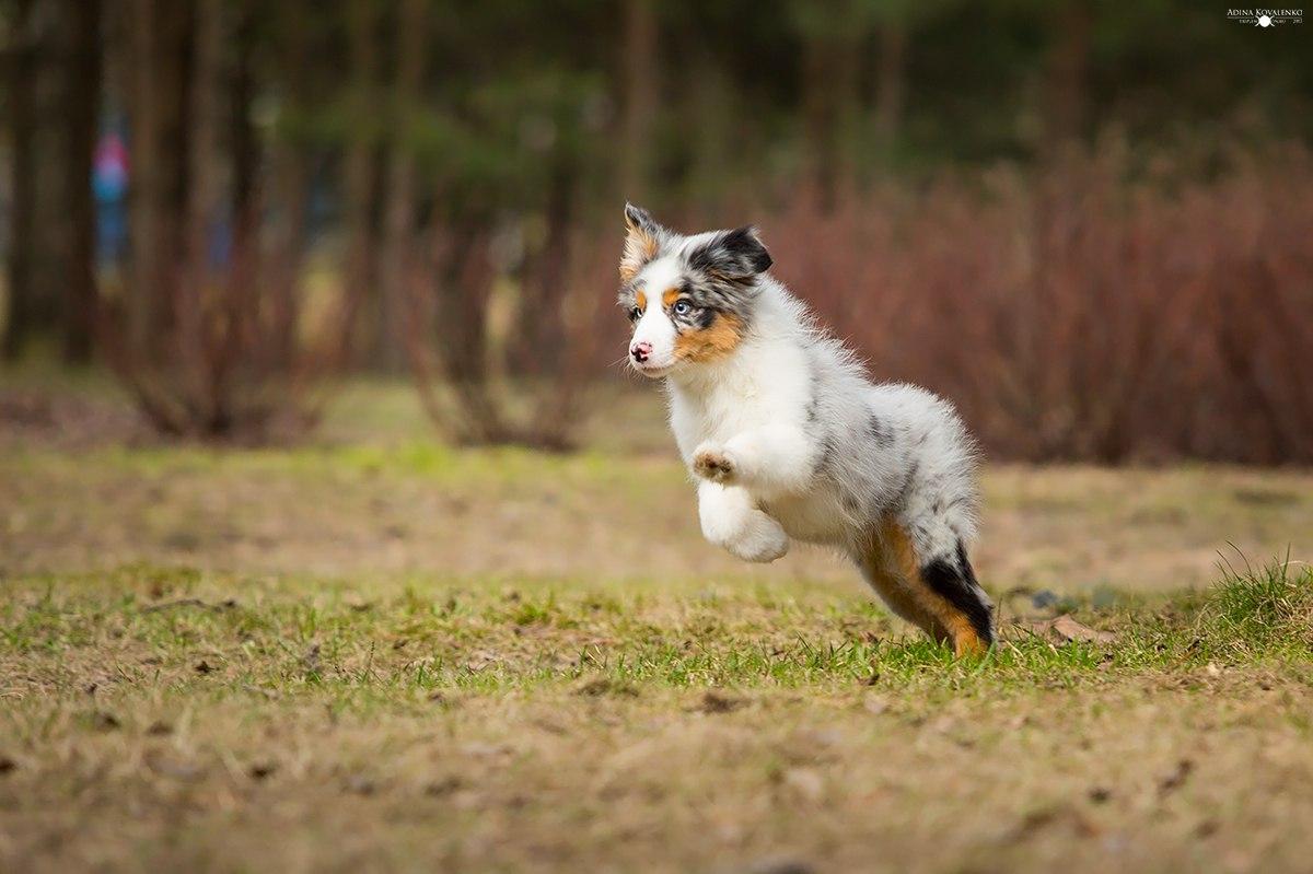Питомник Триплмун, свободные щенки --5_siGhSvQ