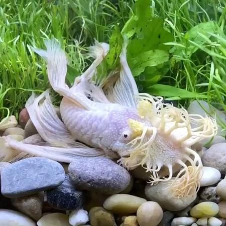 "Fascinated about underwater on Instagram: ""Beauty aquariumfansaquariumaquariumsfishfishesunderwaternaturefishtankcheckitoutvideovideo..."