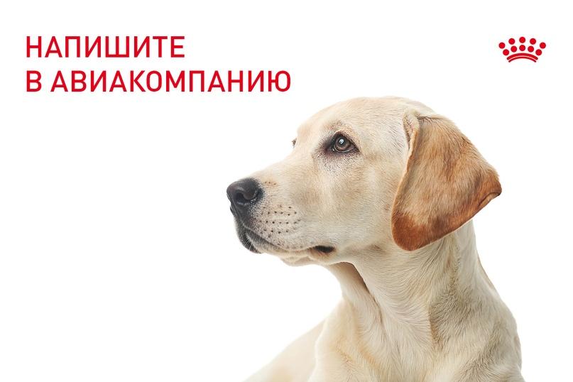 Kak Perevezti Sobaku V Samolete Vkontakte