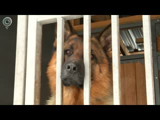 Десятки пород собак вдруг стали особо опасными. Как быть владельцам овчарок и бультерьеров?