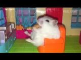 Yo it's Hamster Time