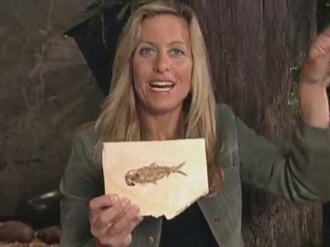 12. Окаменевшие рыбы / Fish Fossils