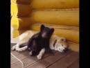 В России даже у собак есть медведи 😄