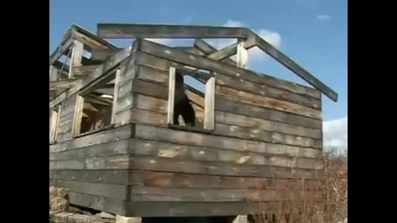 Леди баг и даун кот 2 сезон 19 серия RYTP