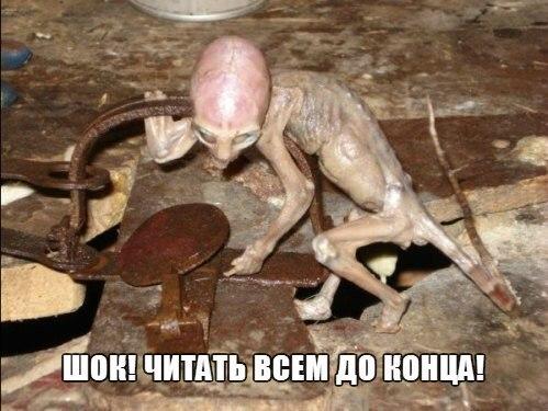 Кадры не поддаются человеческому объяснению. Жестокое нападение чудовища на людей и домашний скот на границах Чернобыльской зоны — уже не редкость.