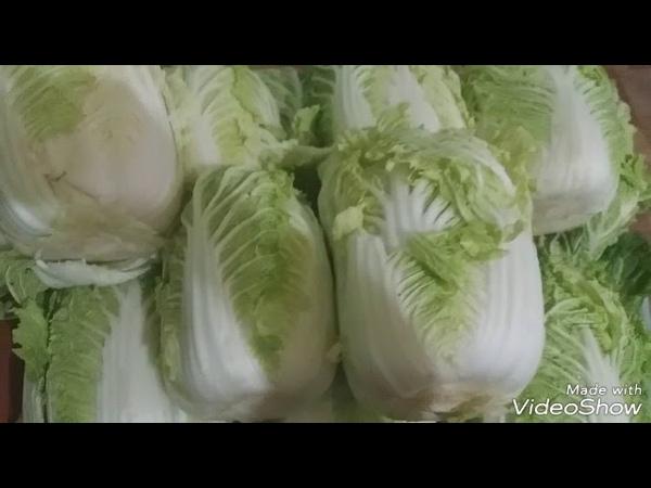 Как я солю пекинскую капусту часть 1