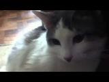Ленивый кот lazy cat
