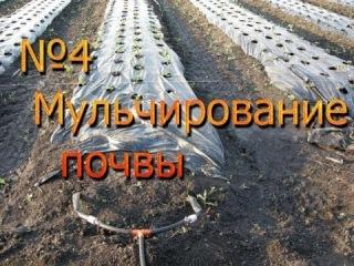 04. Мульчирование почвы