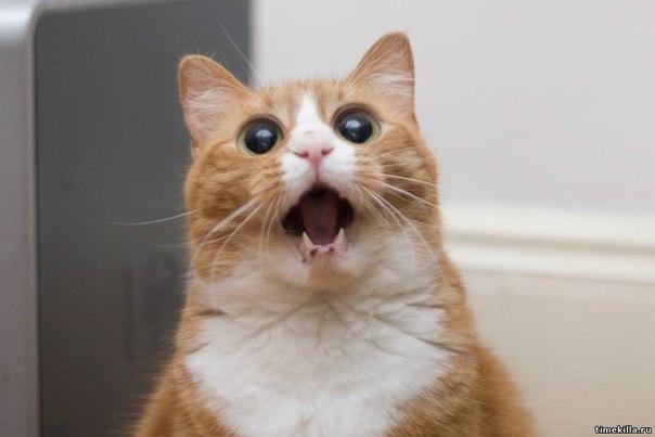 Картинки по запросу Играли с котом в футбол пробкой от шампанского