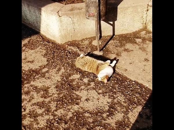 Кошка загорает на солнце в Одессе. Январь 2019