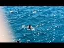 Лазурном море