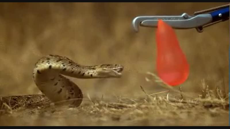 Укус змеи в замедленной съемке.mp4.mp4