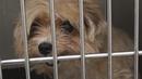 Собаку 4 года не выпускали на улицу.Спасли больную собаку.Ветеринарное ранчо