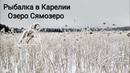 Зимняя рыбалка в Карелии. Озеро Сямозеро. Мелкий окунь