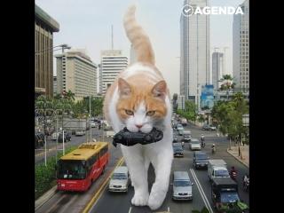 Котики-гиганты Котзиллы
